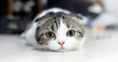 Kedi Kumundan Tasarruf Etmek - Efsane mi Gerçek mi?